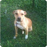 Adopt A Pet :: Lucky Mama - Geismar, LA