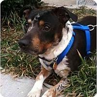 Adopt A Pet :: Jackson - Arlington, TX