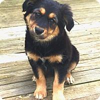 Adopt A Pet :: *Aurora - PENDING - Westport, CT