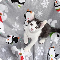 Adopt A Pet :: Hugs - Union, KY