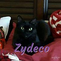 Adopt A Pet :: Zydeco - Garner, NC