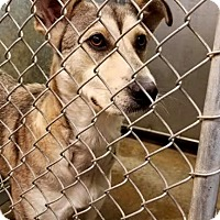 Adopt A Pet :: Shadow - ADOPTED! - Zanesville, OH