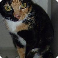 Adopt A Pet :: Lindy - Hamburg, NY