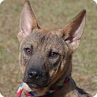 Adopt A Pet :: Ben AD 03-04-17 - Preston, CT