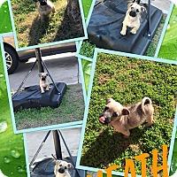 Adopt A Pet :: Heath - Scottsdale, AZ