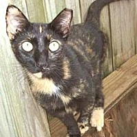 Adopt A Pet :: Cloee - Miami, FL