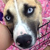 Adopt A Pet :: Pearl - Cameron, NC