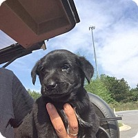 Adopt A Pet :: Mystique - Burlington, NJ