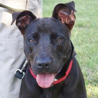 Mixed Breed (Large) Mix Dog for adoption in Austin, Texas - Christina