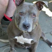Adopt A Pet :: Chattat - Cooperstown, NY