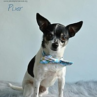Adopt A Pet :: Pixar - Kenner, LA