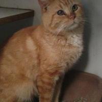 Adopt A Pet :: Gunther - Ashtabula, OH