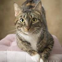 Adopt A Pet :: Molly - Waco, TX