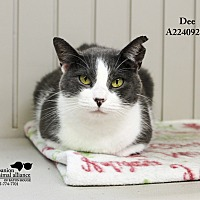 Adopt A Pet :: Dee - Baton Rouge, LA