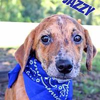 Adopt A Pet :: Jazzy - Batesville, AR
