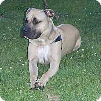 Adopt A Pet :: Stanley - Dallas, PA
