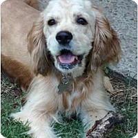 Adopt A Pet :: Joy Lynn - Sugarland, TX