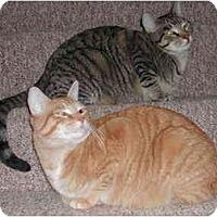 Adopt A Pet :: Jake and Colby - cincinnati, OH