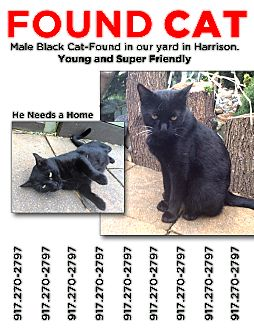 Domestic Shorthair Cat for adoption in Harrison, New York - Lefty