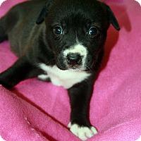 Adopt A Pet :: Puca - Baton Rouge, LA