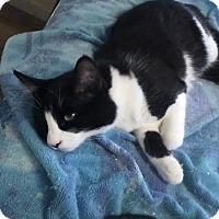 Adopt A Pet :: Charlie - Alamo, CA