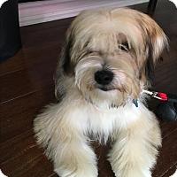 Adopt A Pet :: Desi Pup - Cerritos, CA