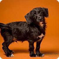 Adopt A Pet :: Rollo - Norwalk, CT