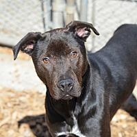 Adopt A Pet :: Billy - Seattle, WA