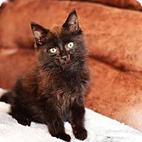 Adopt A Pet :: Levi - Xenia, OH