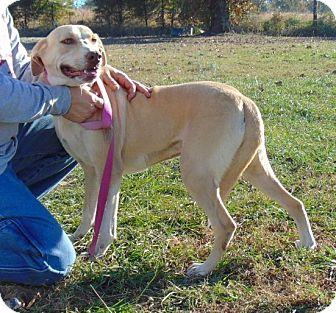 Labrador Retriever Mix Dog for adoption in Chicopee, Massachusetts - Brittney