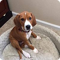 Adopt A Pet :: Ann - Meridian, ID