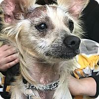 Adopt A Pet :: Ghost - San Francisco, CA
