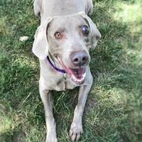 Adopt A Pet :: Eva - Washington, IA