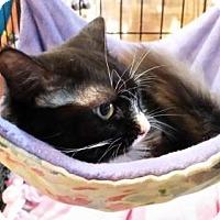 Adopt A Pet :: Penny - Greensboro, NC