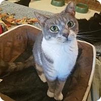 Adopt A Pet :: Pickles - MARENGO, IL