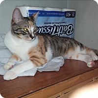Adopt A Pet :: Cleo - San Dimas, CA
