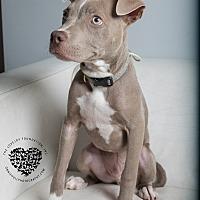 Adopt A Pet :: Romeo - Inglewood, CA