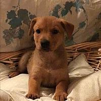 Adopt A Pet :: CARMELLA-APPLICATION PENDING - Cranston, RI