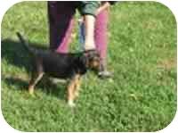 Beagle Mix Puppy for adoption in Harrodsburg, Kentucky - Winston