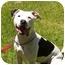 Photo 1 - Pit Bull Terrier Mix Dog for adoption in El Cajon, California - Sadie