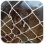 Photo 1 - Pit Bull Terrier Mix Dog for adoption in Grand Saline, Texas - FiFi