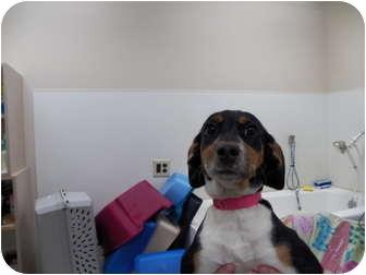 Hound (Unknown Type) Mix Dog for adoption in Burnsville, North Carolina - Adelina