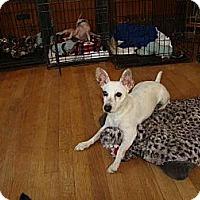 Adopt A Pet :: Lacey - Leesport, PA
