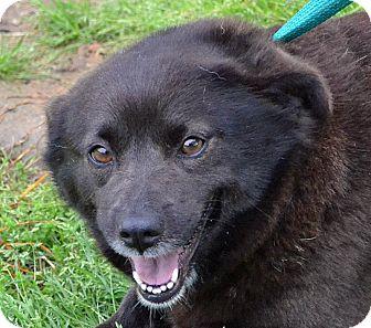 Corgi/Retriever (Unknown Type) Mix Dog for adoption in Searcy, Arkansas - Wilma