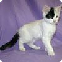 Adopt A Pet :: Edwina - Powell, OH