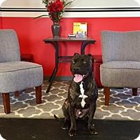 Adopt A Pet :: Malcom - New Albany, OH