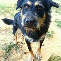 Adopt A Pet :: Rocky  5 - Graceville, FL