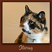 Adopt A Pet :: Stormy - Indianapolis, IN