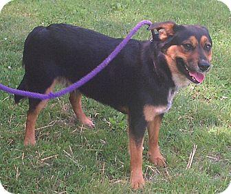 Australian Cattle Dog Mix Dog for adoption in Metamora, Indiana - Alvin