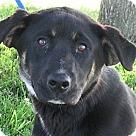 Adopt A Pet :: Clive